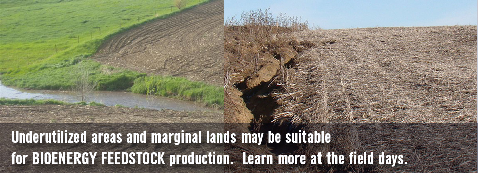 Underutilized areas and marginal lands may be suitable for bioenenergy feedstock production